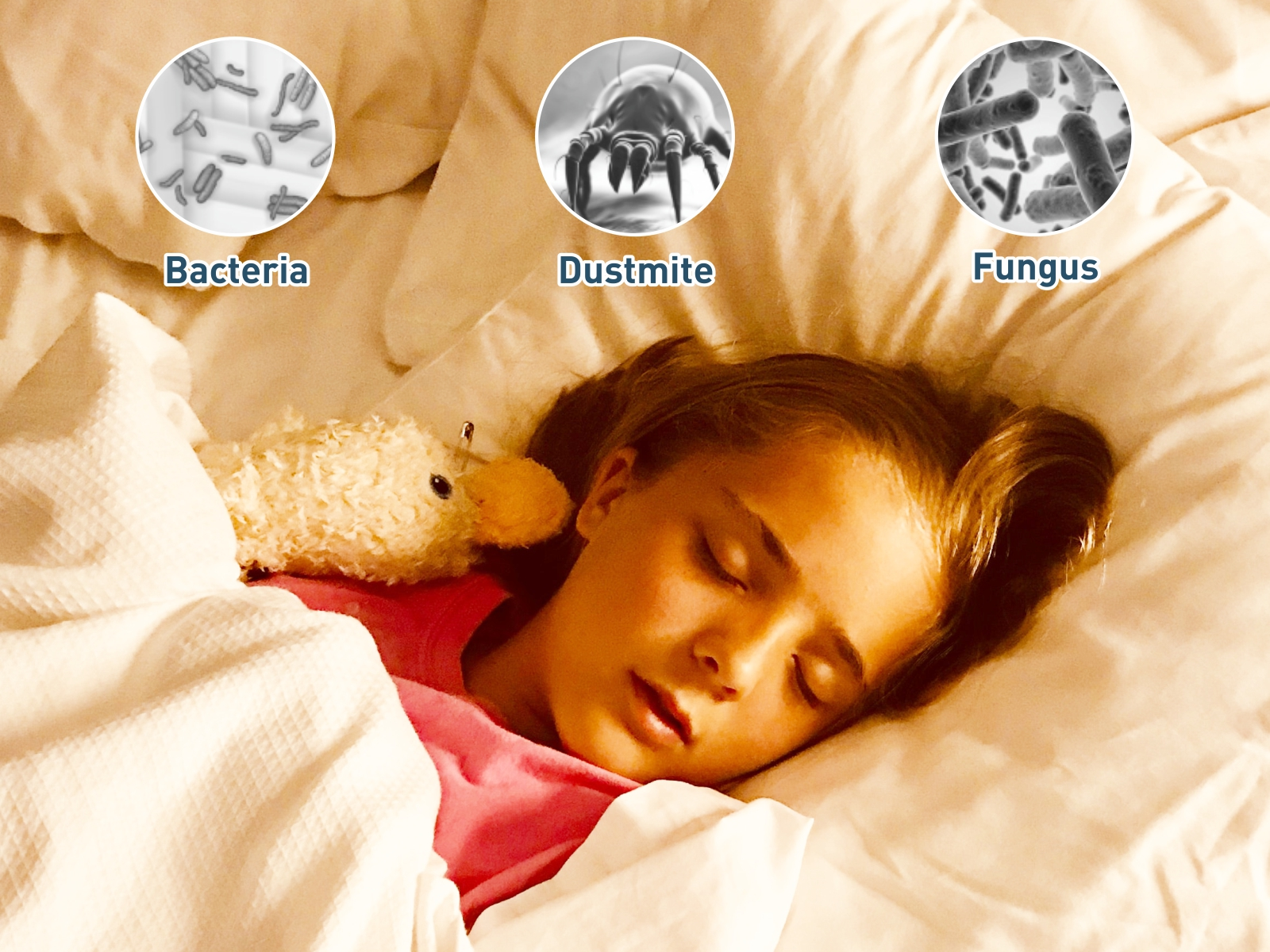 anti - allergy mattress